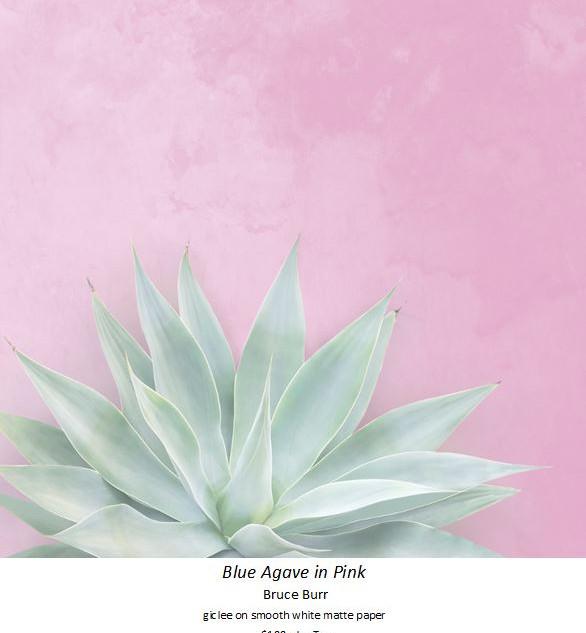 Blue Agave in Pink - Bruce Burr