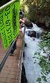 זרימת המים השוצפת בבניאס נבקר במעיינות השופעים  הליכה של כשעה ומחצה במסלול  מהיפים בארץ לאורך הנחל השוצף מהמעיינות לקיבוץ שניר כולל בריכות הקצינים, תחנת הקמח  העתיקה הגשר התלוי והמפל הגדול