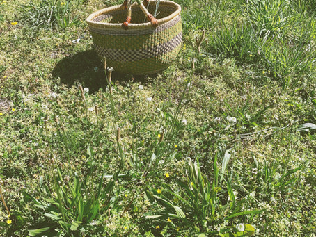 Cooking the Herbs You Forage - Dandelion Greens