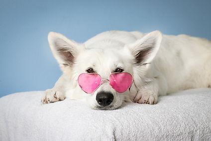 medium-short-coated-white-dog-on-white-t