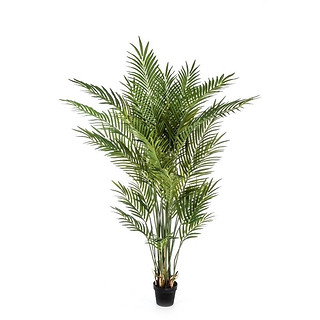 FOREST ARECA PALM