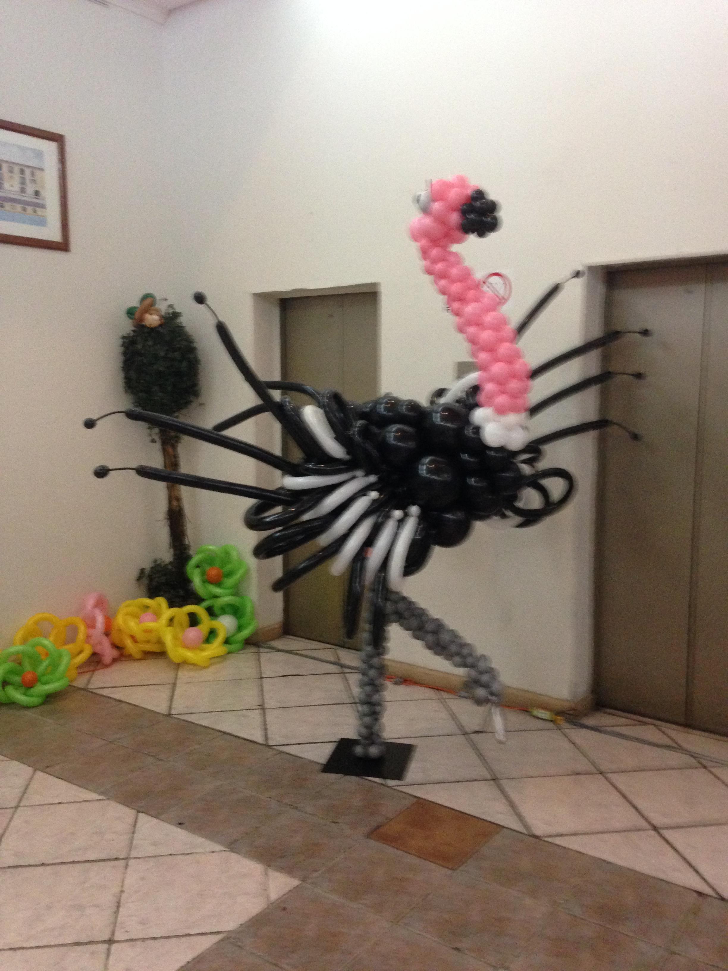 avestruz con globos