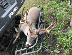 Low Fence Whitetail