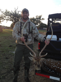 Low Fence Axis Buck