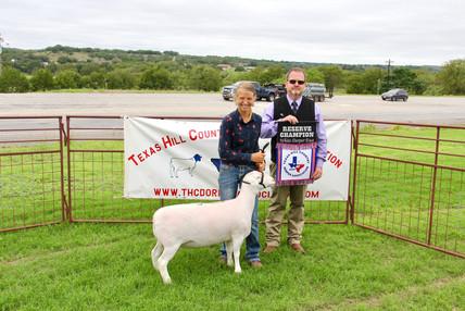 Res. Champion White Dorper Ewe.jpg