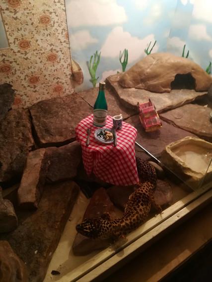 Installation in Lizard Tank by Helen Robinson