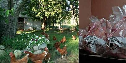 Common-Wealth-Farm.jpg