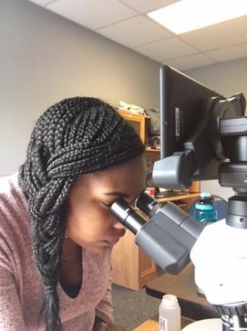Microscopy Work