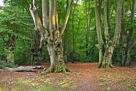 eppingforest2.jpg