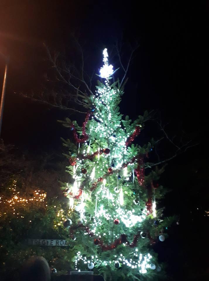 Tree again