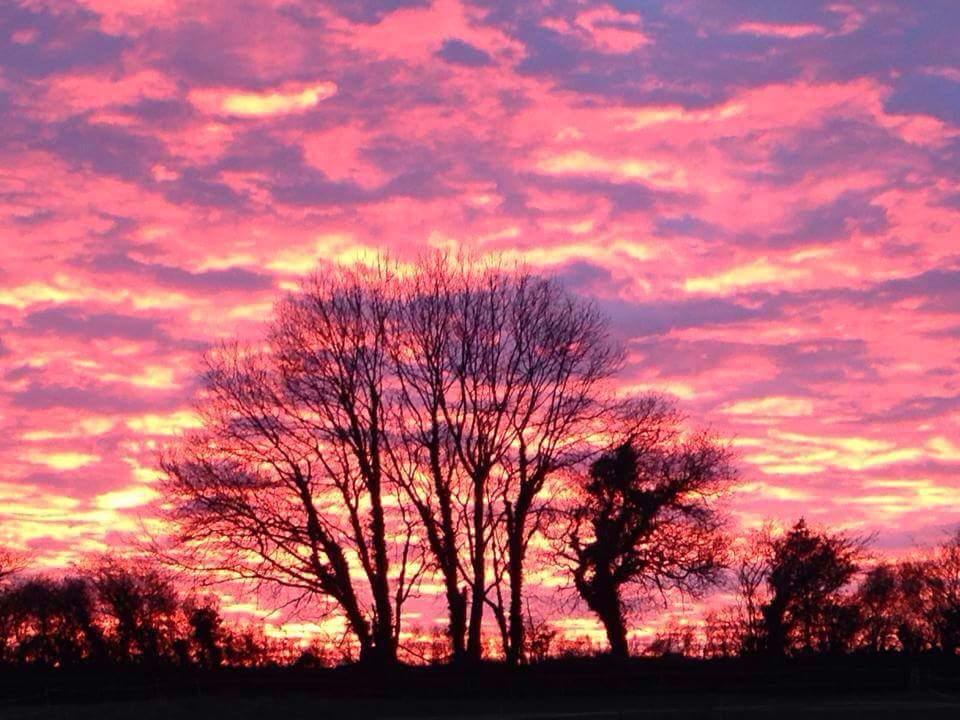 Trelissick sunset