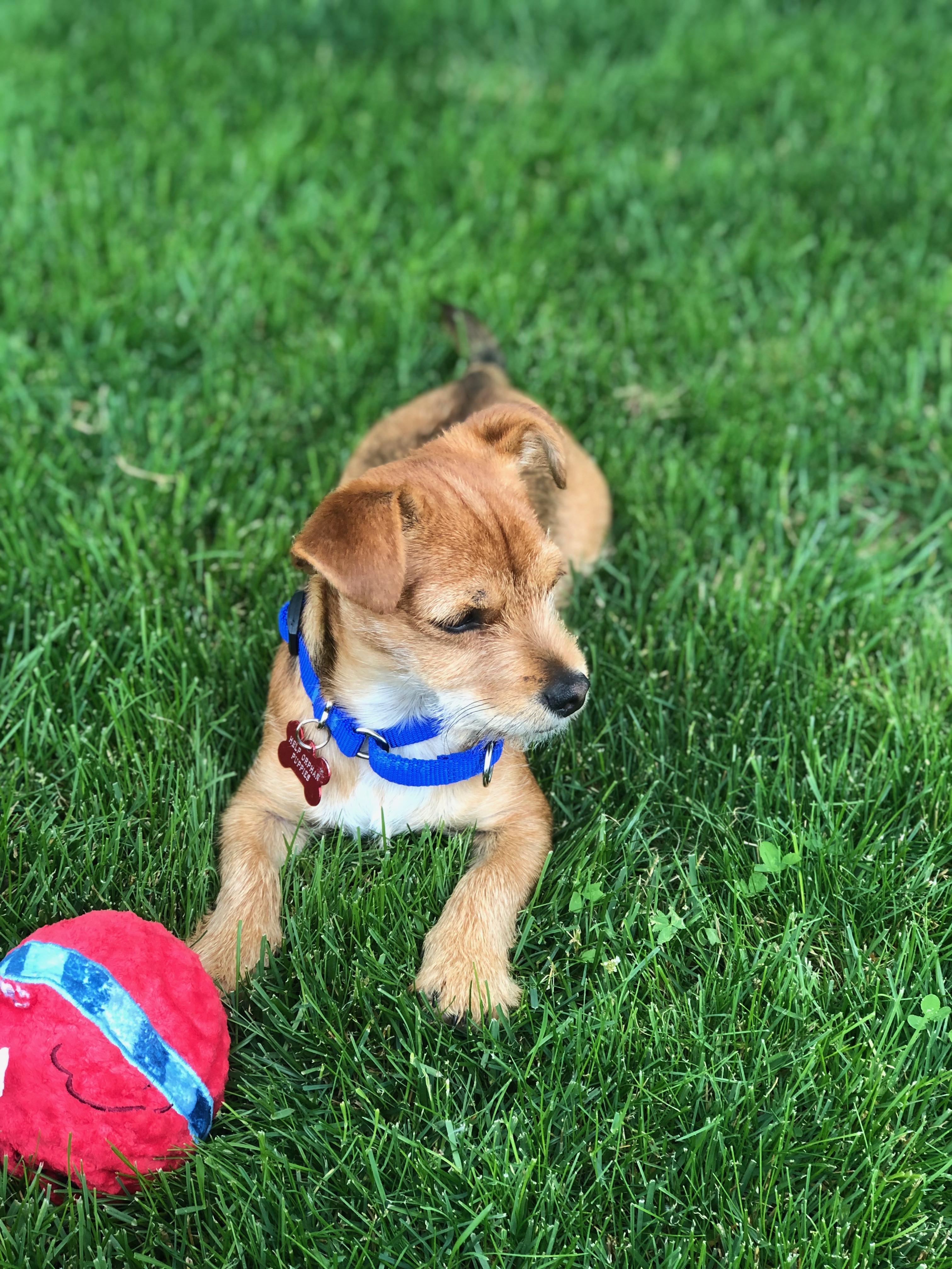 Dog Adoption | United States | Help Orphan Puppies