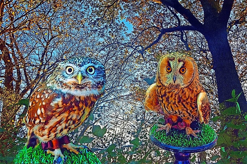 Hour of the Owls
