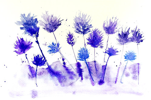 Lavender Meadow