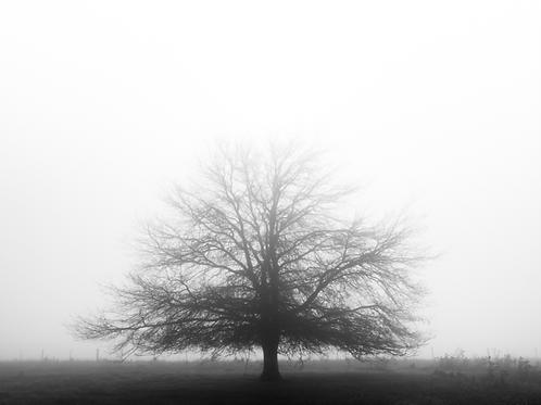 Paul Fleming print tree