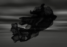 'Black Coral'- 2019