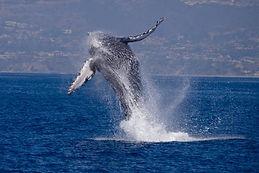 dana-wharf-whale-watching.jpeg