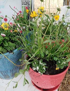 planters_edited_edited.jpg
