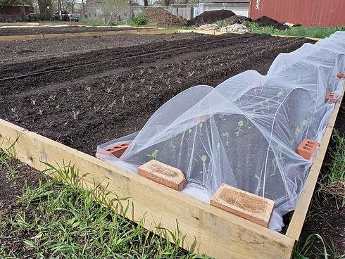 incubator farm.jpg