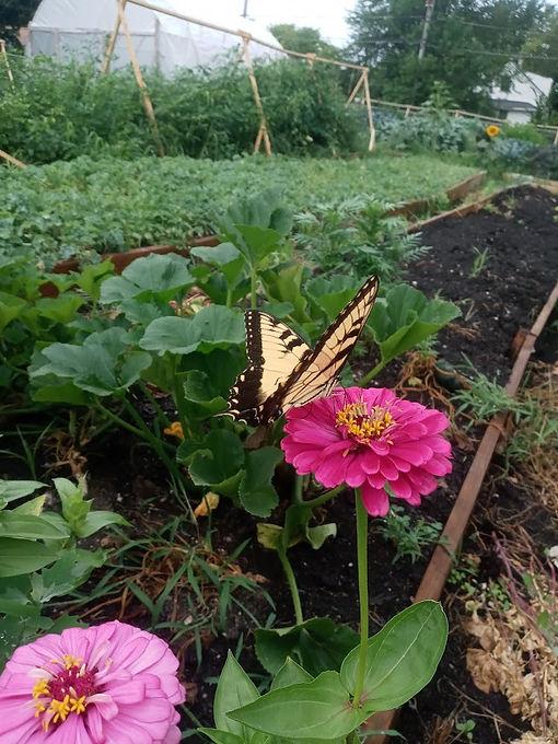 butterfly flower farm.jpg