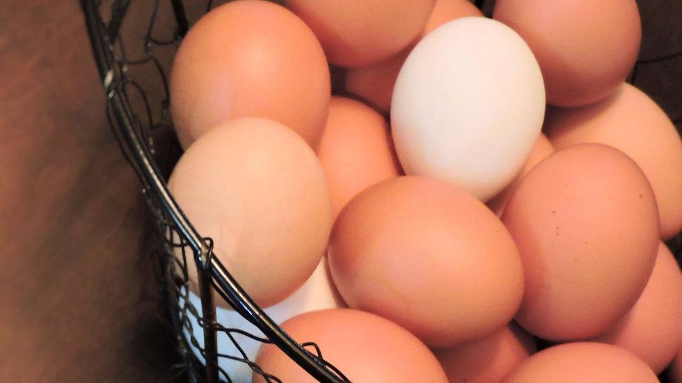 Fresh Eggs - Dozen