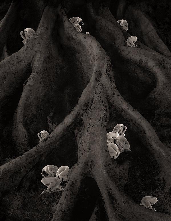 Arbor_RAICES 2.jpg