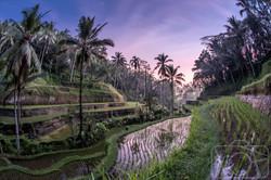 Tegallalang Rice Terraces, Bali.