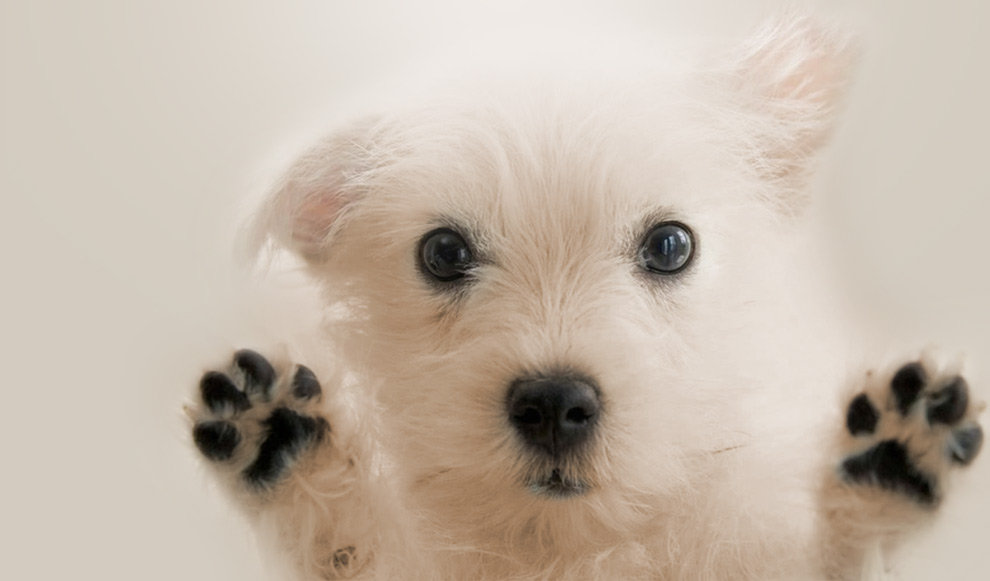 home-page-dog-paws.jpg
