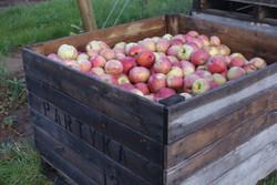 Partyka Apples