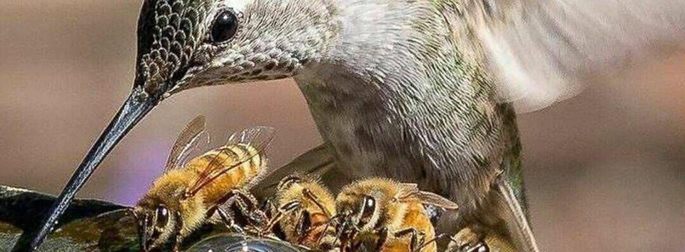 honey bird.jpg