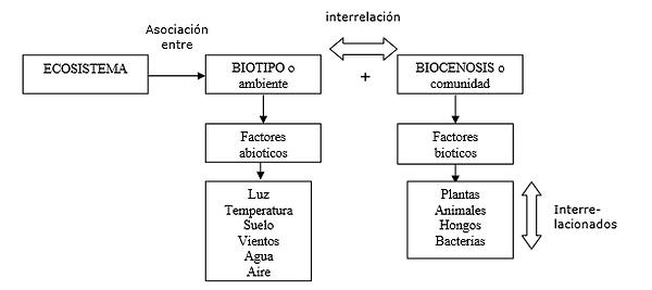 ecosistema.png