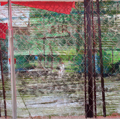 Free Air and Mircea's Backyard, 2016, oil on linen, 30x40in