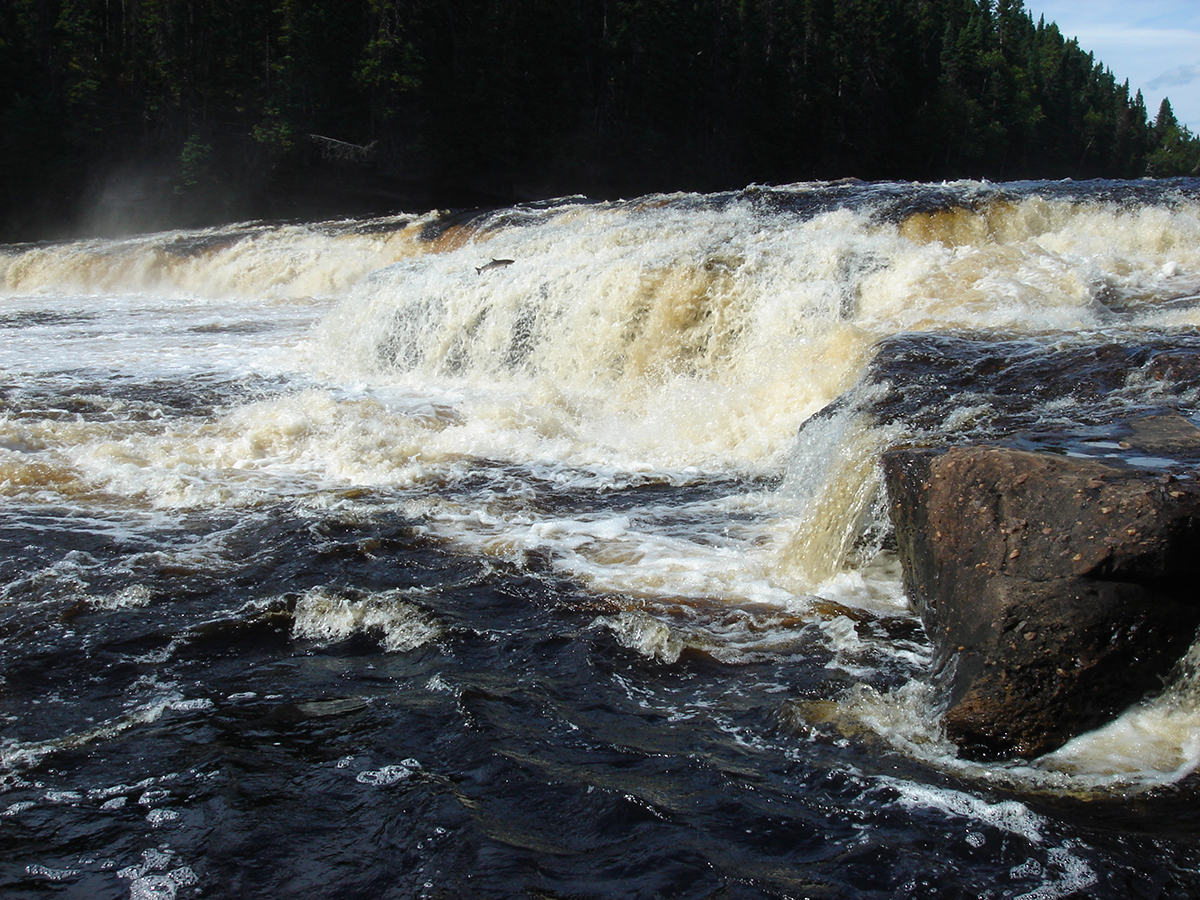 Salmon jumping at Big Falls