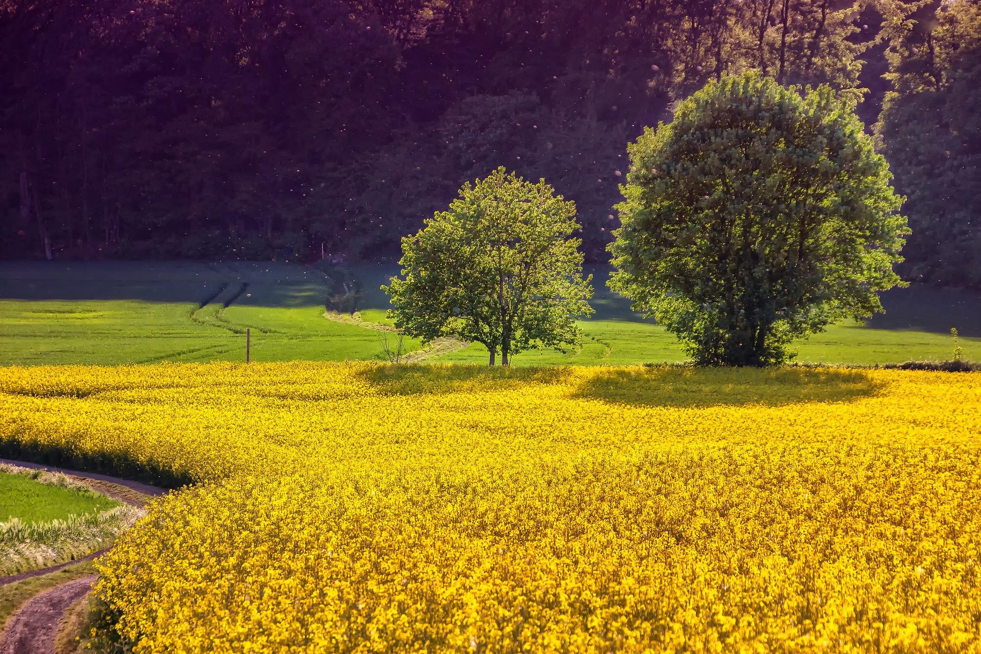 landscape-3427990_1920.jpg