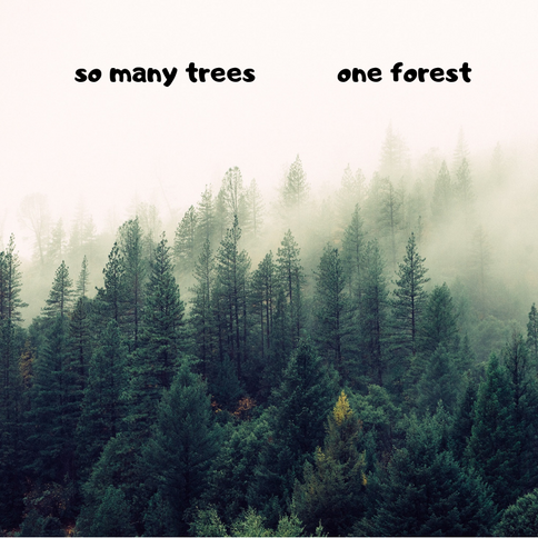 One Forest