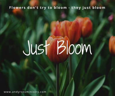 Just Bloom