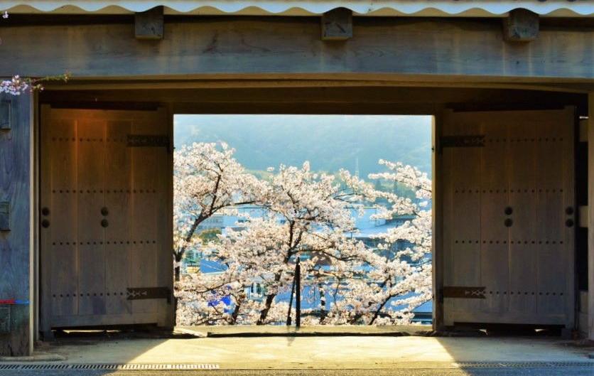今週末が満開!桜の名所「臼杵公園」へお花見に行こう