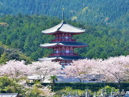 臼杵の桜景色2020