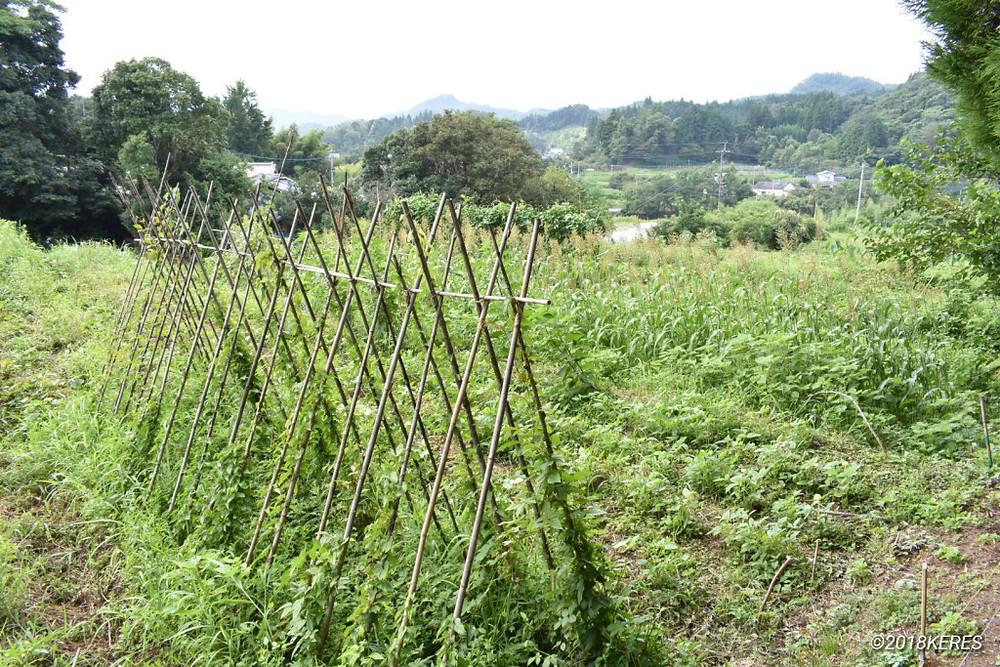 そよふく農園 自然農の畑