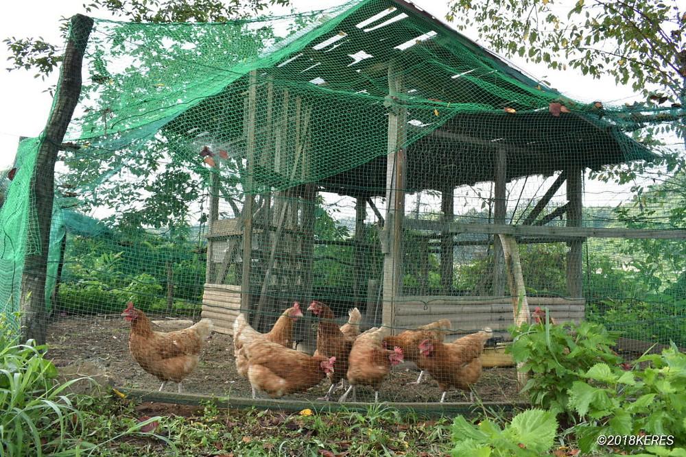 そよふく農園の鶏小屋
