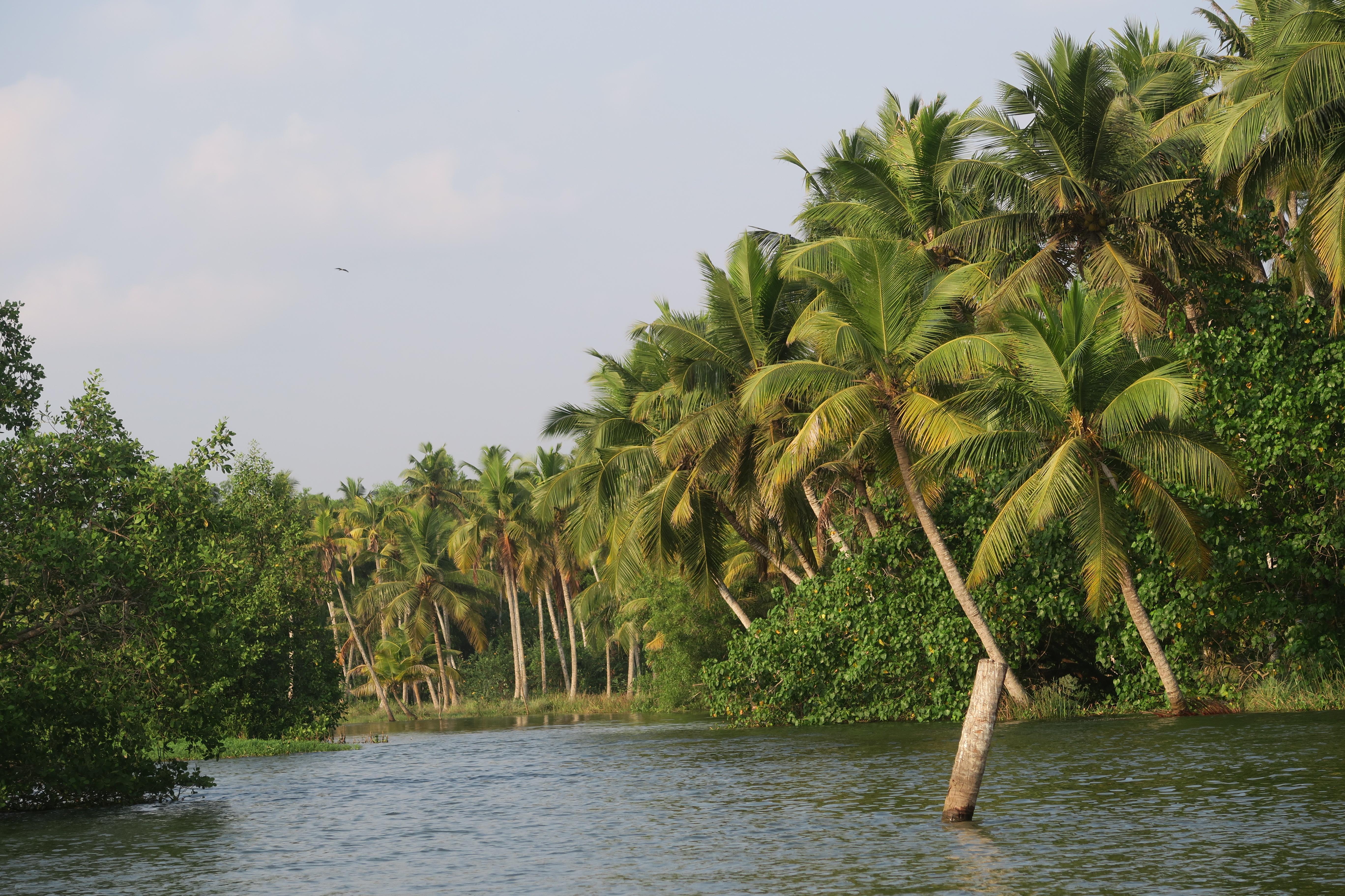 Krásy státu Kerala