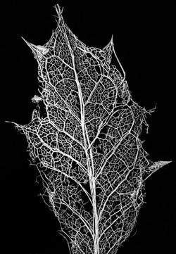Photosynthetic Pulmonary System