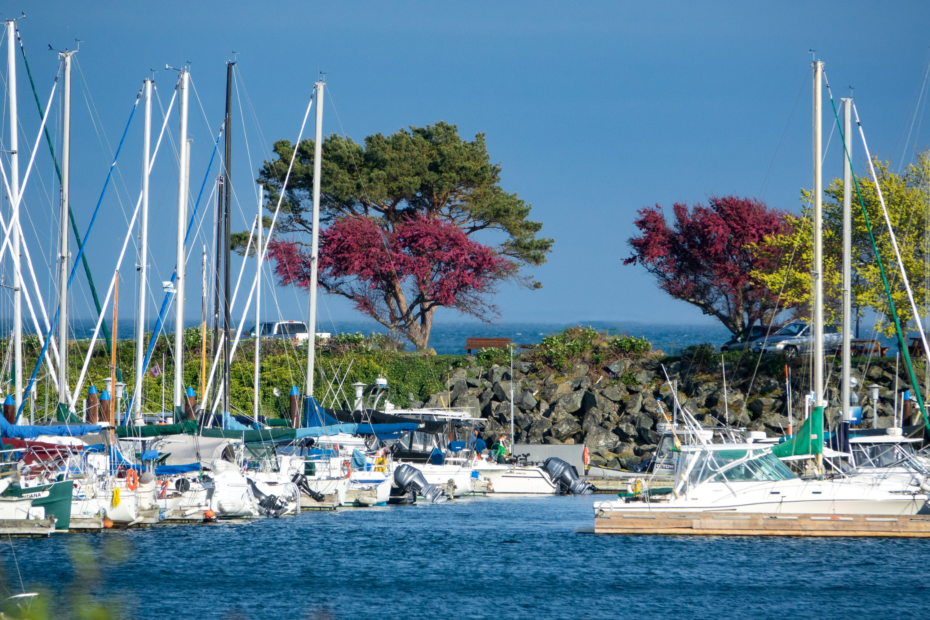 Oak Bay Marina in Spring