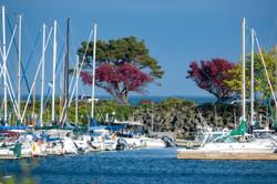 Oak Bay Marina in Spring