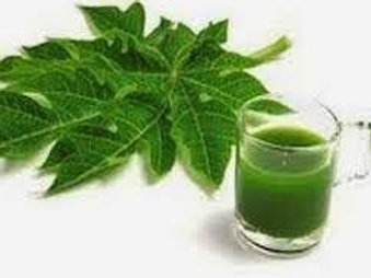 Papaya Leaf Extract (Caricaya Papaya)