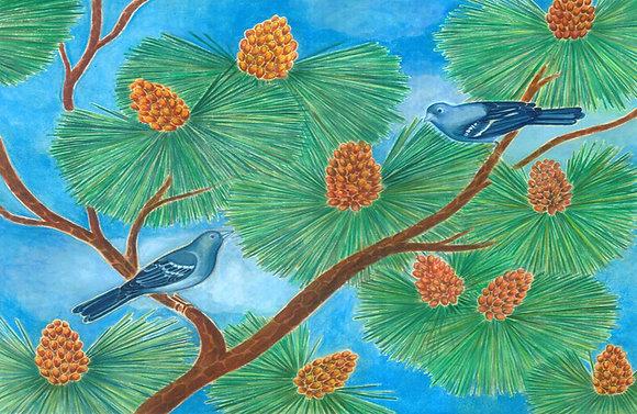 Pinzón azul y pino canario