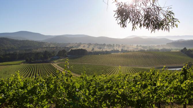 澳洲葡萄酒探索——雅拉谷(1)