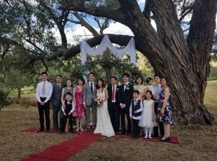 百年大树下的酒庄婚礼