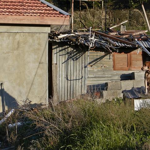 Shadow dog, Northern Cyprus 2009
