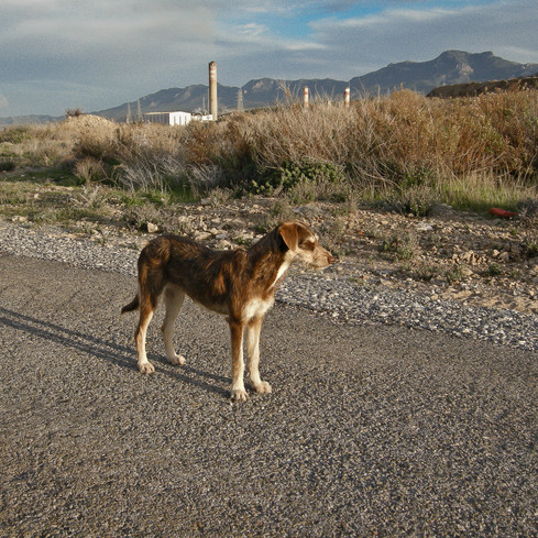 Poseur_Northern Cyprus 2009